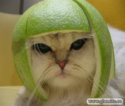 Poze Animale-Protectia muncii Bancuri glume poze - Glumite.ro