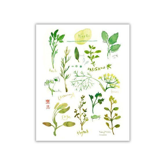 Herb Print With Mint, Watercolor Herbs, Herb Poster