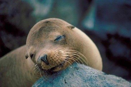 Défense Cause Animale / Lions de mer