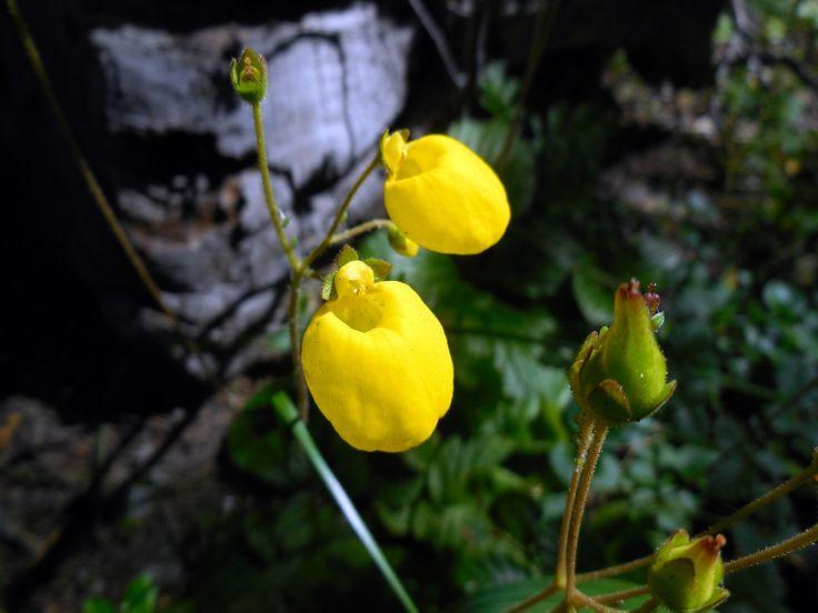 Flora  Cerro Neumeyer Bariloche Río Negro/Argentina