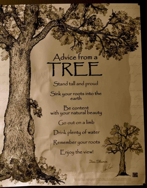 I love trees:) quotes: Words Of Wisdom, Secret Gardens, Life Lessons, Quotes About Trees, Scrapbook Pages, Favorite, Inspiration Quotes, Good Advice, Trees Quotes