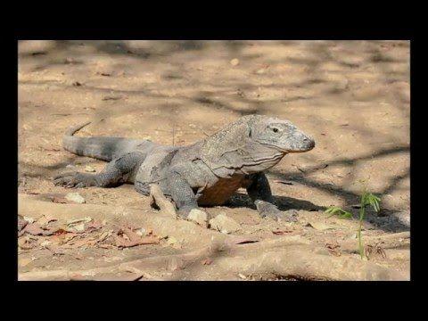 Komodo to Raja Ampat Diving Expeditions 2015