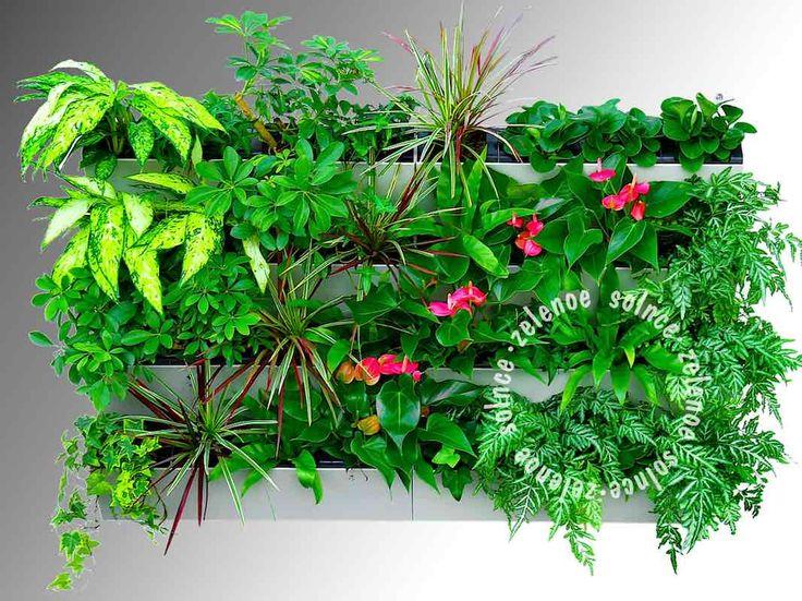 фитомодуль, фитомодули для вертикального озеленения, вертикальное озеленение, вертикальные сады, фитостены, живые стены, озеленение стен, фитодизайн, green wall, vertical garden