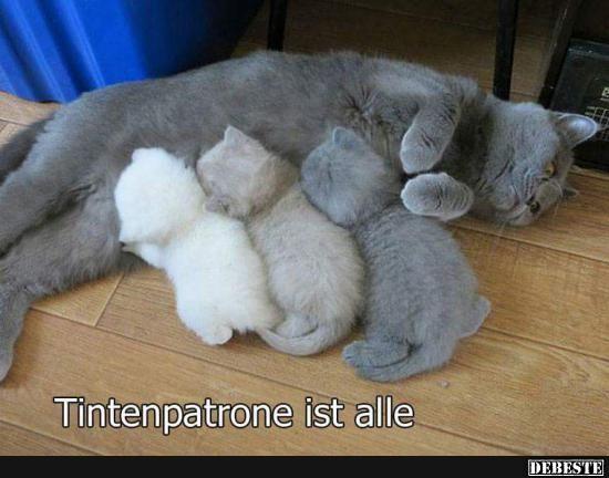 Besten Bilder, Videos und Sprüche und es kommen täglich neue lustige Facebook Bilder auf DEBESTE.DE. Hier werden täglich Witze und Sprüche gepostet!                                                                                                                                                                                 Mehr