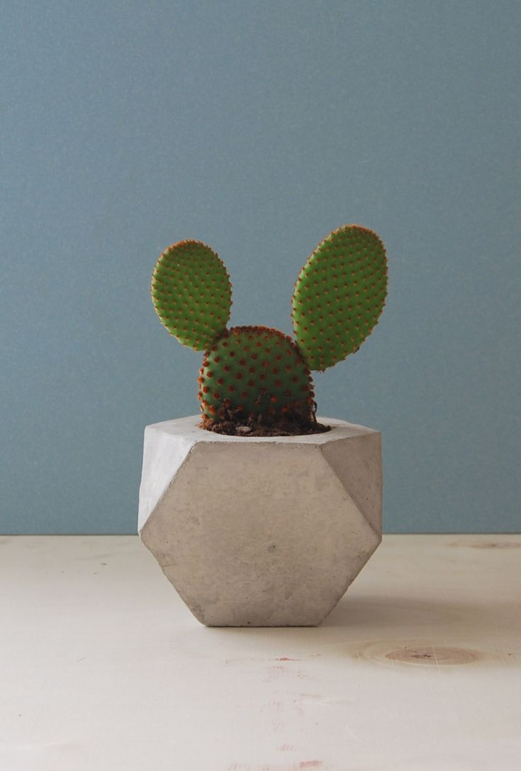 EDRO DESIGN.'''I have a cactus just like this one..I call it my Mickey Mouse cactus..:)