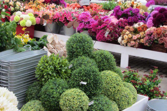 Kolory września na sprzedaż! :) Centrum Ogrodnicze jest wypełnione po brzegi rozmaitymi roślinami i dekoracjami! Zapraszamy :)