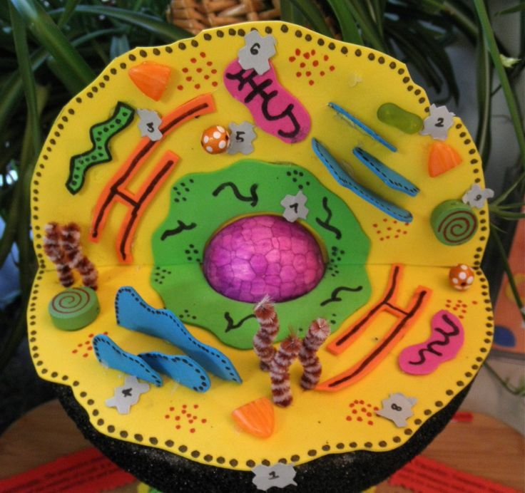 Plant cell is a cell of protozoa and higher plants that are highly structured.