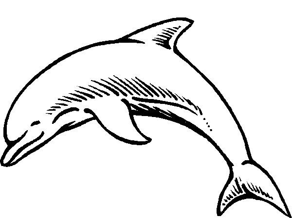Dolphin Coloring Pages Find This Pin And More