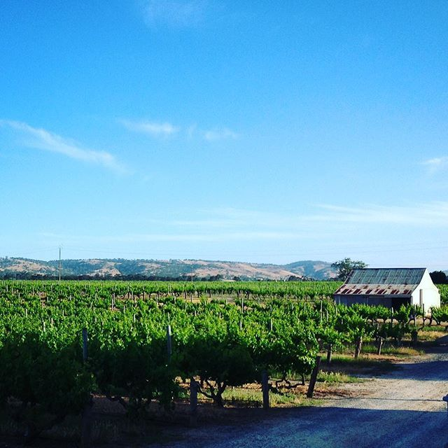 Old vines, timeless views...