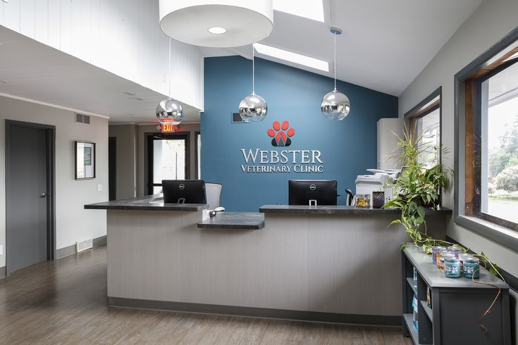 Webster Veterinary Clinic Innenarchitektur Von Jason Longo