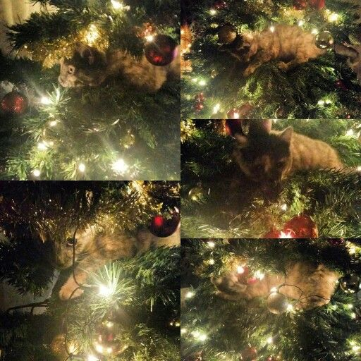 Playing in the Christmas tree