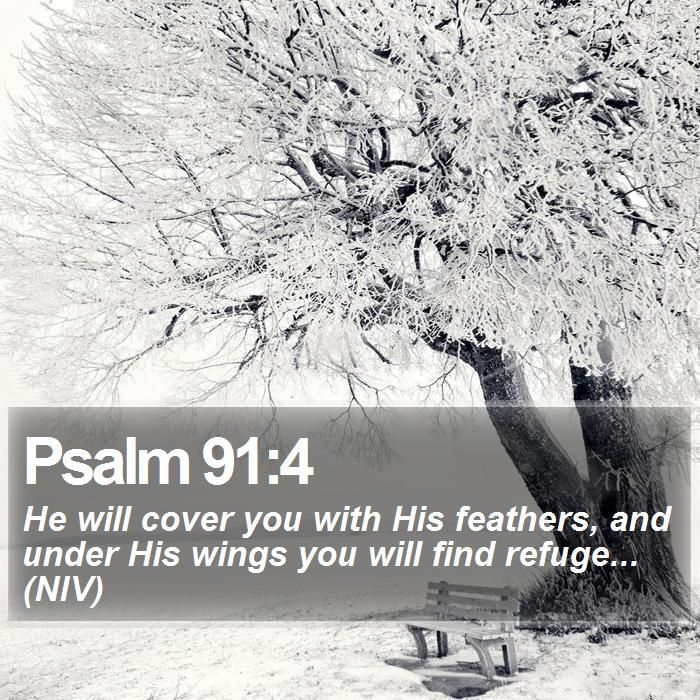 Psalm 91:4 He will cover you with His feathers, and under His wings you will find refuge... (NIV)  #Devotions #Worship #Happiness #Lord #YouthMinistry #DailyBibleVerse http://www.bible-sms.com/