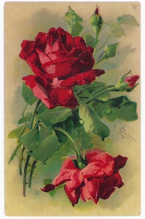 red roses for love
