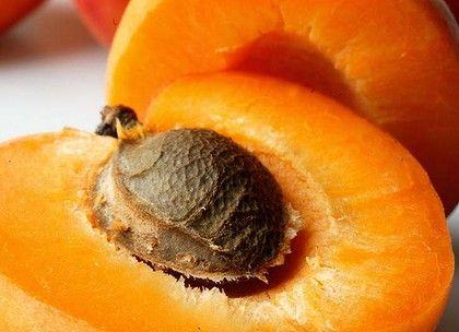 noyau abricot