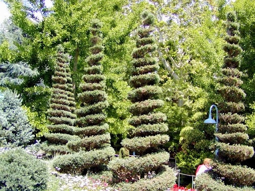 1000 images about gilroy gardens on pinterest gardens for Gilroy garden trees