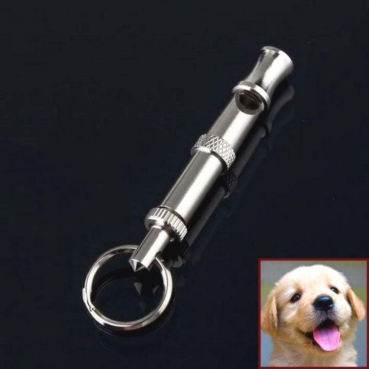 Potty Training Puppy Zak George And Clicker Training Nervous Dog