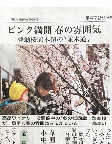 皆さま、こんにちは。 本日、2月6日(月)付けの山形新聞に高畠ワイナリーの啓翁桜が紹介されましたので、ご紹介いたします。 先週は気温が高く、陽気な日もあり、開花が一気に進み ちょうど、今が満開のピークを少し過ぎた頃合いです。 今週の8日(水)と来週15日(水)はワイナリーの定休日となっておりますので、是非それ以外の日にお越しくださいませ。 啓翁桜ディスプレイ 期間:2月14日(火)まで 営業時間10時から16時30分まで(ショップ)Facebook