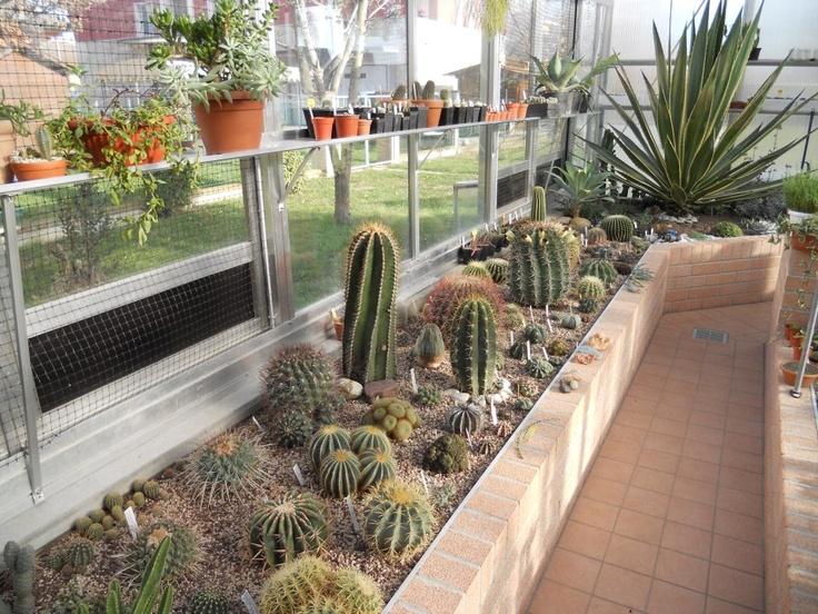 Serra Glicine con piante grasse