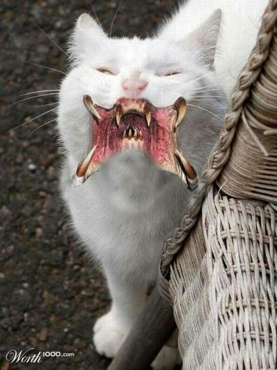 Underworld Cats