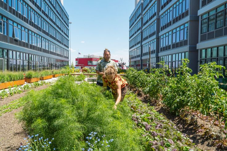 A 26-year-old farmer grows 50 types of produce in the courtyard of a new rental complex.