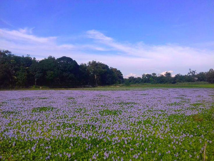 taman+bunga.Kampar,Pekanbaru,Riau