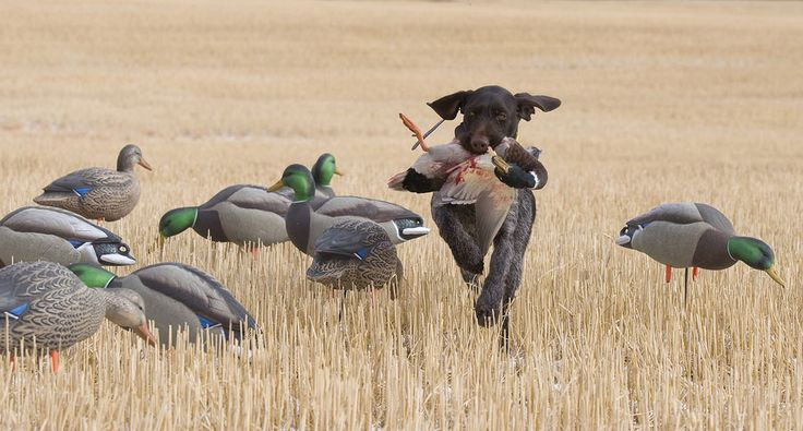 15 Pieces of Waterfowl Hunting Gear You Don't Want to Be Without