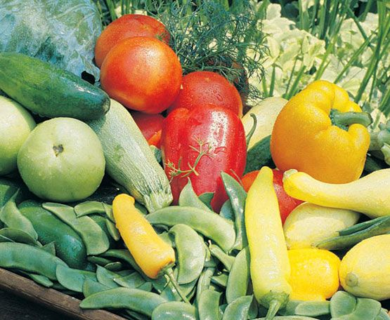 We offer selected vegetables and herbs that have proven successful in Western climates.