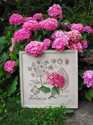 Krása je všude pro toho, kdo ji chápe a chce: Hydrangea