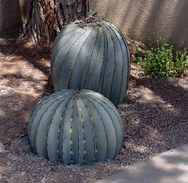 150 Best Cactus Decor Images On Pinterest