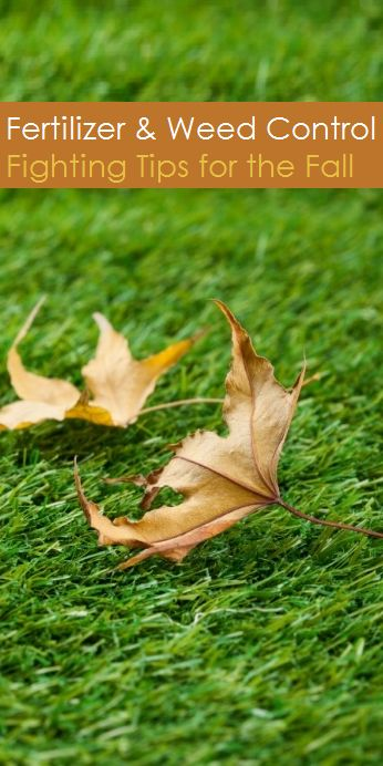 Fertilizer and weed fighting tips for fall fall 39 s arrival brings changes in day length - Autumn lawn care advice ...