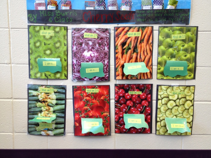 Interactive bulletin board about fruits and vegetables ...