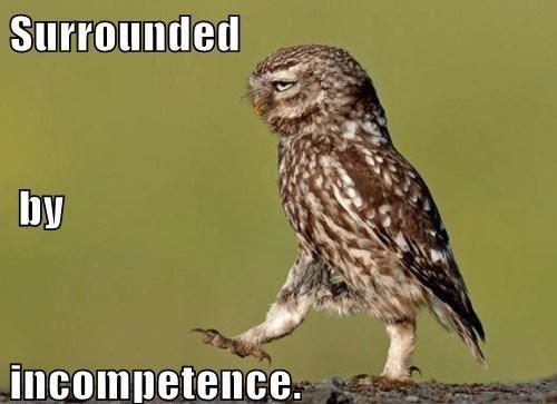 Funny Owl Funny Photo Captions Owl Walking Is Surrounded By Incompetence Bad Pick Up Lines
