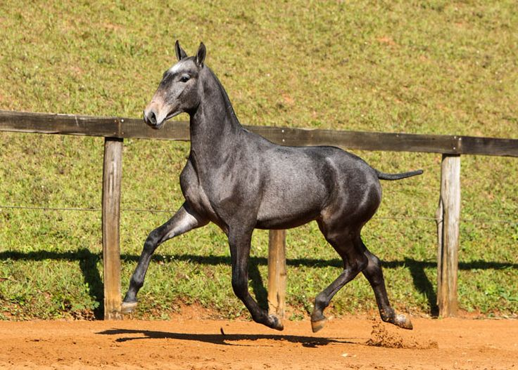 World Dressage News:  High Bids and Exceptional Horses Headline 16th Interagro Yearling Auction