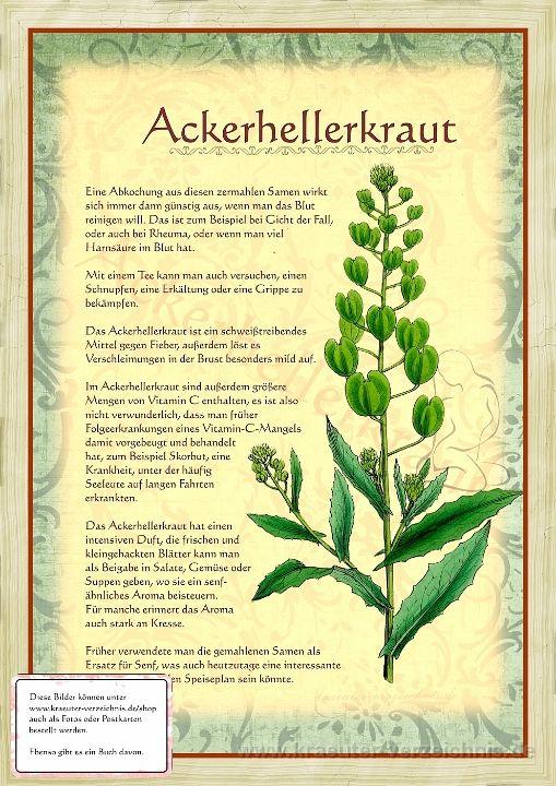 Bilder aus dem Buch Alte Heilkräuter-Zeichnungen
