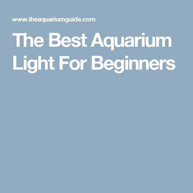 The Best Aquarium Light For Beginners