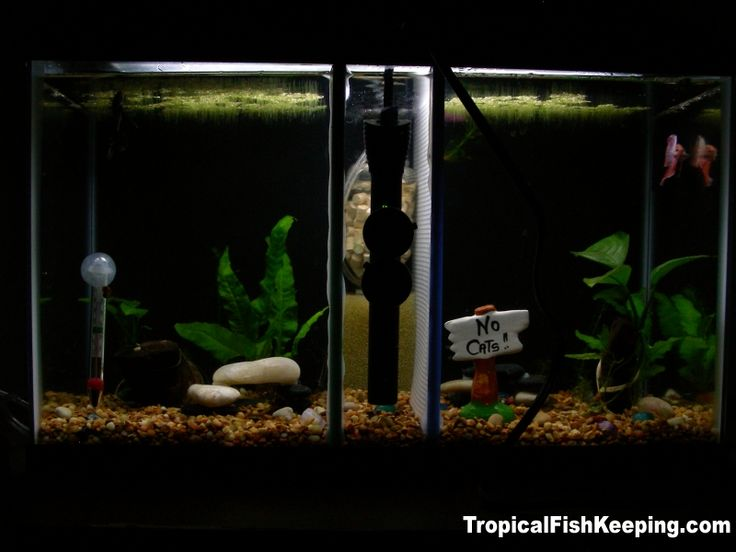 1000 images about beautiful betta fish and their homes on for Betta fish tank heater