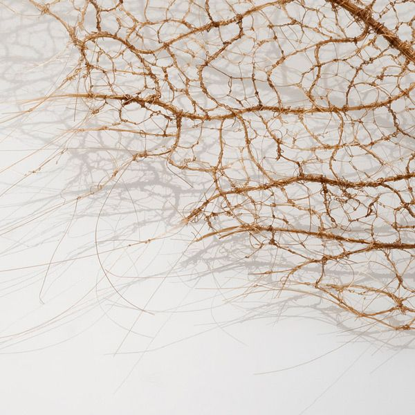 A leaf made from human hair and tiny stitches on a stabilizer backing that dissolves.  Amazing!