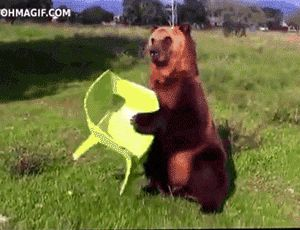Bear Chair.gif, 11 gif of animals that just need to rest http://www.funnyordie.com/articles/86de65b117/gifs-of-tired-animals-that-just-need-to-sit-down-for-a-second