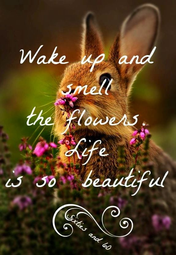 """Wake up and smell the flowers quote via """"Sixties and 60"""" at www.Facebook.com/pages/-Sixties-and-60/276454592397627"""
