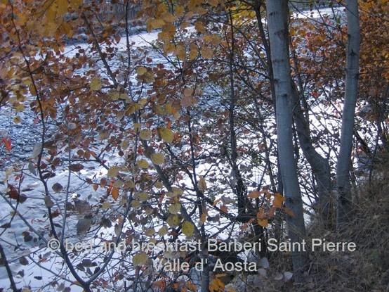 alberi in autunno Valle d'Aosta  #aostavalley #travel #holidays #alps #italy #nature