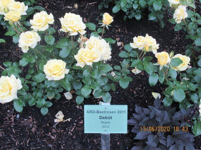 Planten Un Blomen Park In Hamburg Plantenunblomen Urlaub Hamburg Rose Roses Blumen Flowers Urlaubindeutschl In 2020 Urlaub In Deutschland Planen Leben Geniessen
