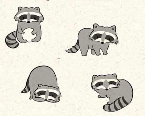 Mejores 39 imágenes de 浣熊 en Pinterest   Mapaches, Arte de mapache ...