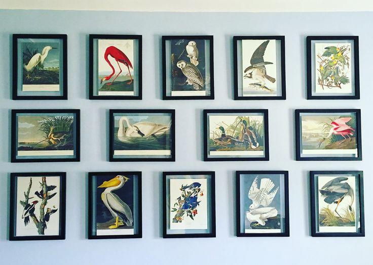 Gallery wall: framed Audubon bird prints