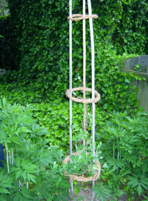 Projects honeysuckle tower trellis gardening tips and
