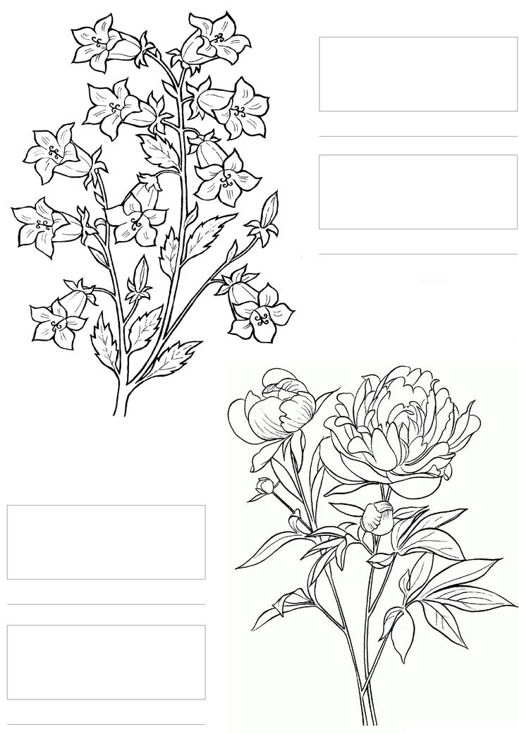 complicolor copic coloring printable pages and coloring books for grown ups at http