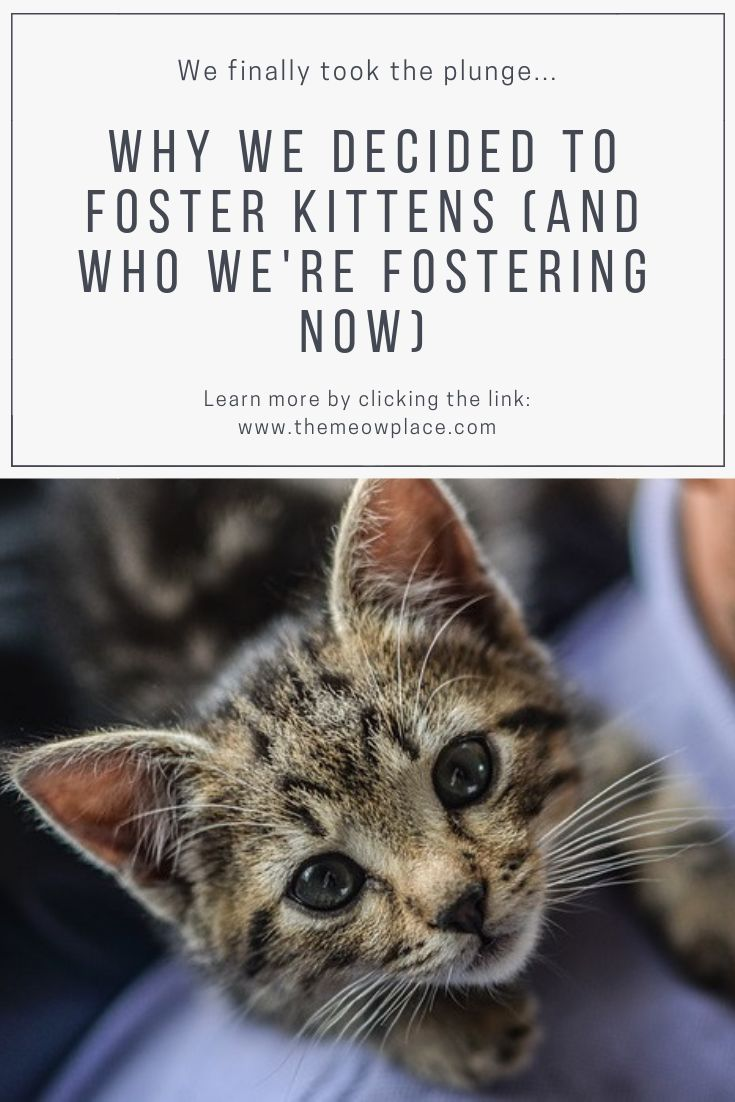 Why We Decided To Foster Kittens (And Who We're Fostering