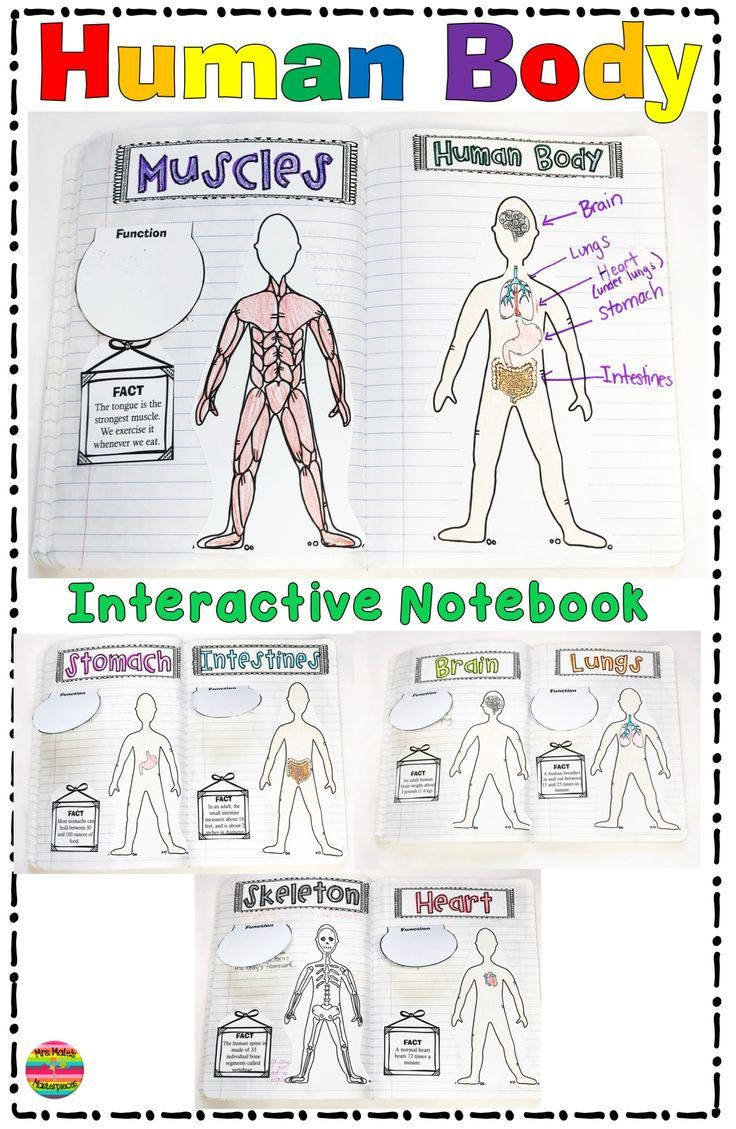 Human Body Systems Interactive Notebook Human body