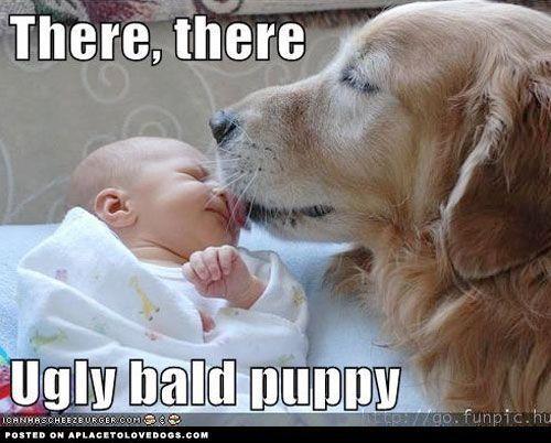 Puppy S First Head Tilt Golden Retriever Retriever Retriever Puppy