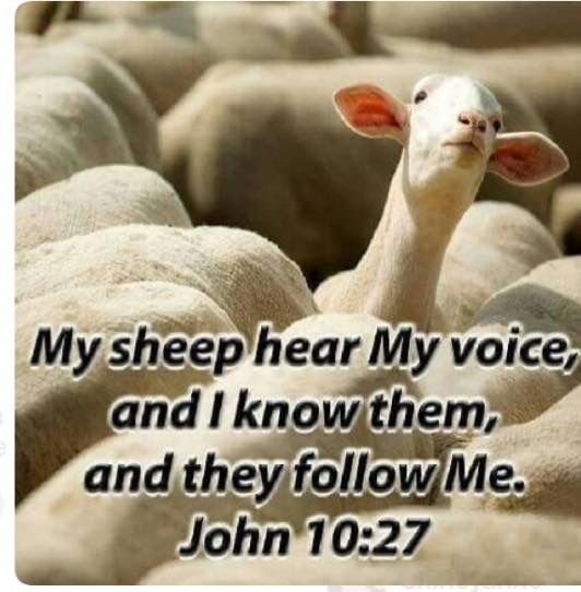 We the sheep... hear God's voice. One in how many?  Father let me be one who always hears your voice..