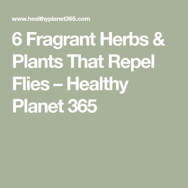 6 Fragrant Herbs & Plants That Repel Flies – Healthy Planet 365